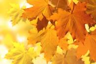Fototapete Herbst